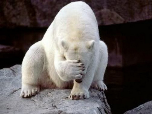 Facepalm-polarbear
